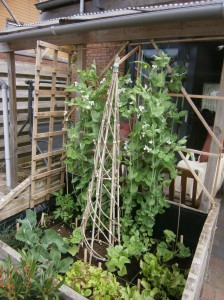 Low budget easy educational vegetable garden