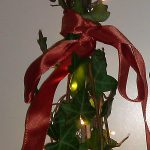 Chrismas pieces of hedera plant